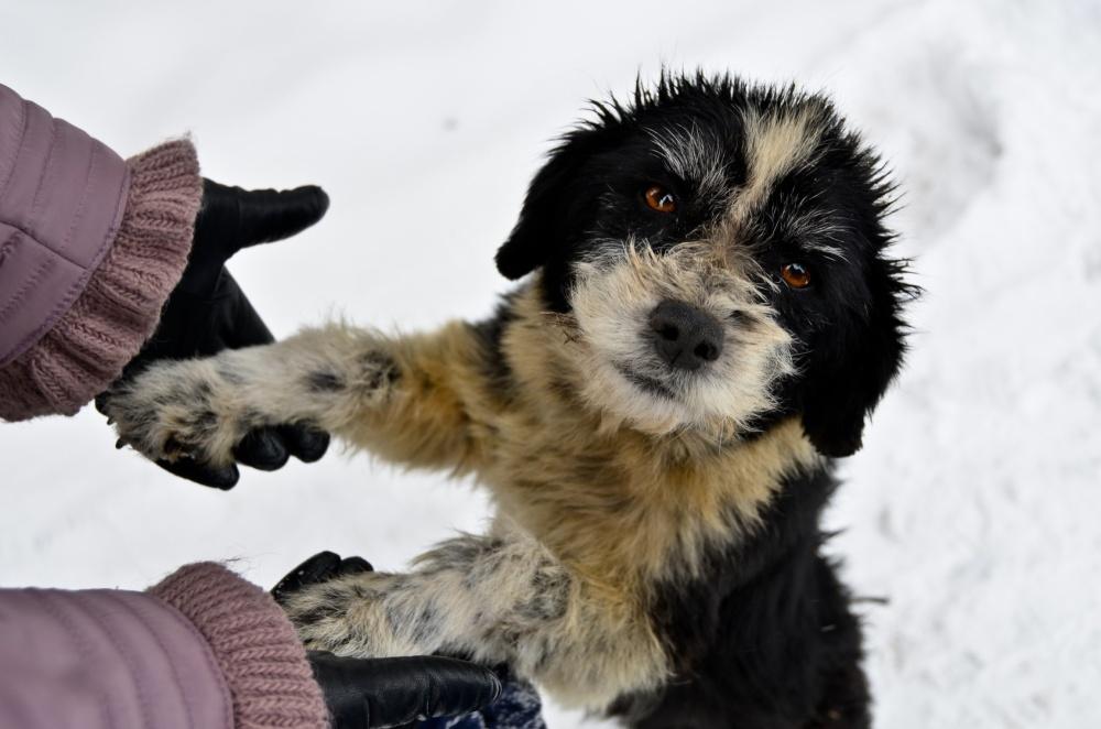 Help to homeless dog
