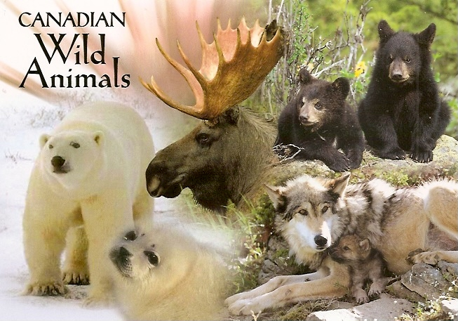 Canadian_Wild_Animals