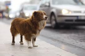 images.jpglost dog