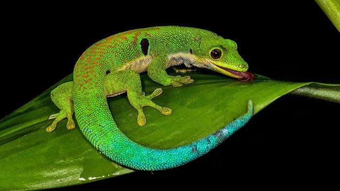lifespan-lizard_244df25469973699