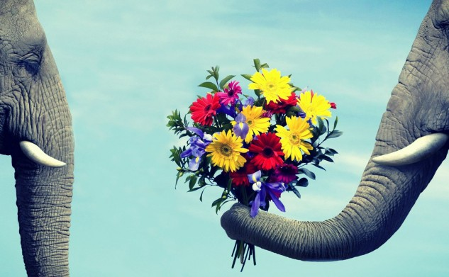 Love-Images-of-Cute-Elephant-Giving-a-Flower-to-Her-Lover-Wallpapers-633x391