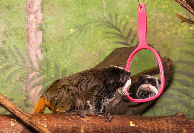 monkey-mirror