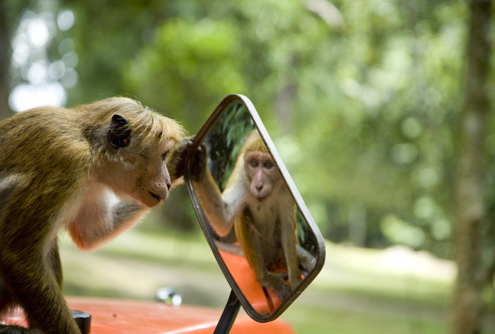 monkeywithamirror