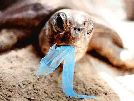 turtle-plastic-bag-photo