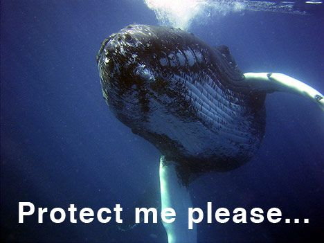 whale-protection-conservation-photo-01