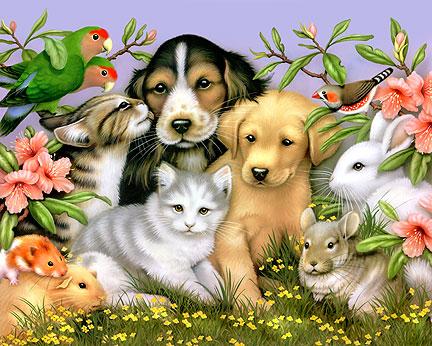 3488262-animals-pets