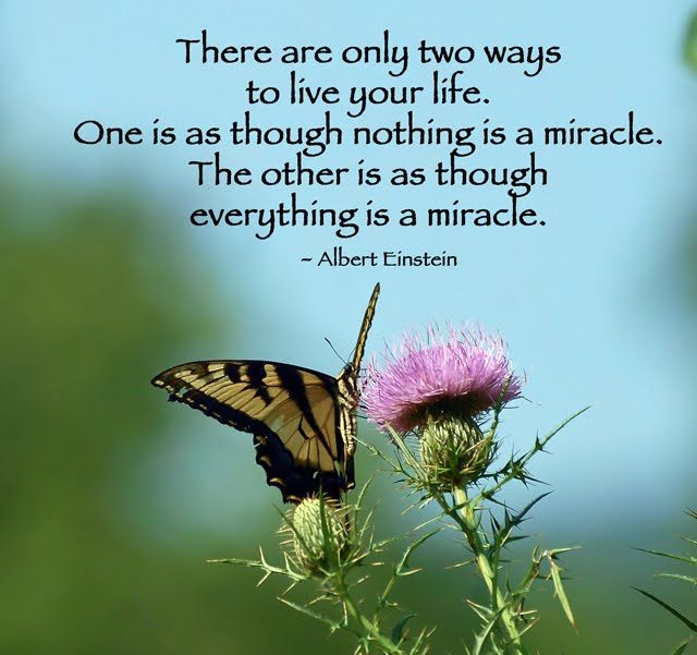"""Spiritual Butterfly Quotes: SPIRITUAL JEWISH POEMS: """"The Butterfly"""