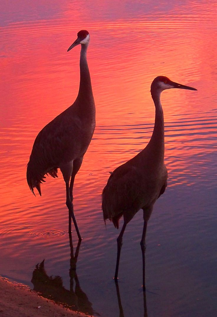 b9abf7597e5e813324f1e1f11253d4d3--beautiful-sunset-beautiful-birds