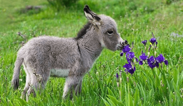 bunch-of-baby-donkeys-600x350