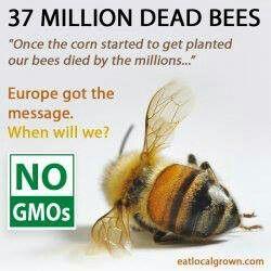f97ada011fddcc6588bbb5e392b2c8ff--buy-bees-dead-bees
