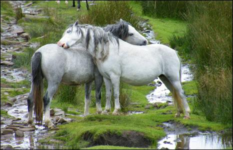 _45152718_horses