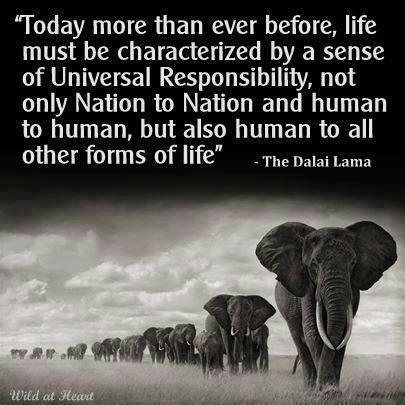 5551551-dalai-lama-quotes-on-animals