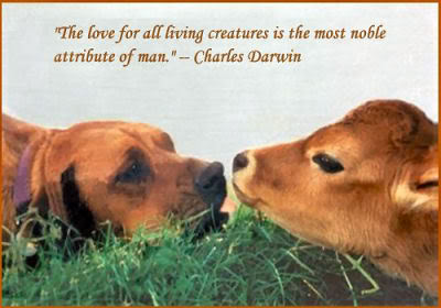 6268885-quotes-about-saving-animals