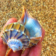 6275d3bc6d43d2b6e91927eccf192dc4--sea-shells-on-the-beach