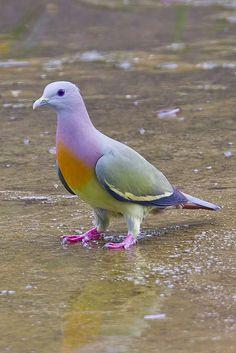 a3124f33693ae9f5631b0f69dc138050--pretty-birds-beautiful-birds