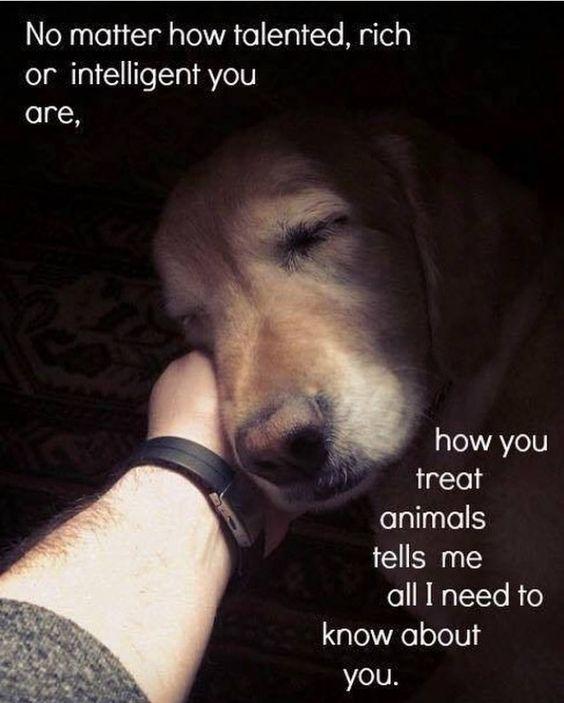 Quotes On Compassion Kindness Bodyandsoulnourishmentblog