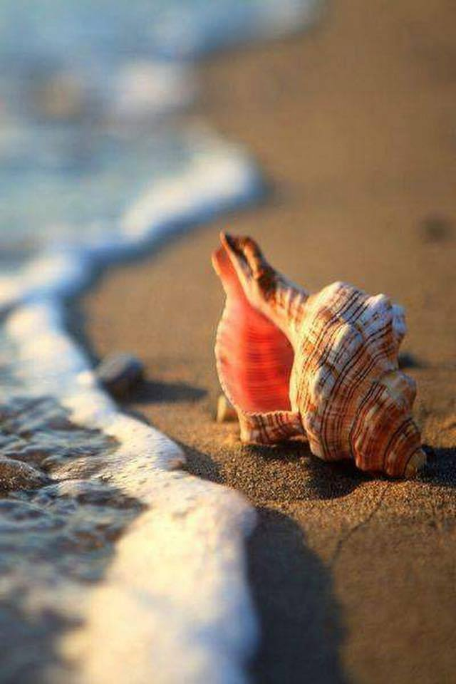 beach-and-seashell