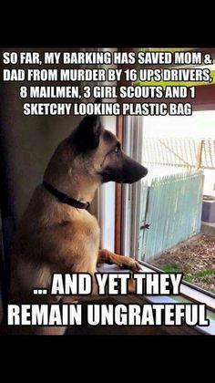 f8a306e58a97945140b46aa092cb80af--dog-pin-animal-memes