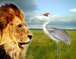 index.jpg lion crane