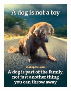 14ff095f3eab0ab5f4a392fe477d6aa1--quote-about-dogs-quotes-about