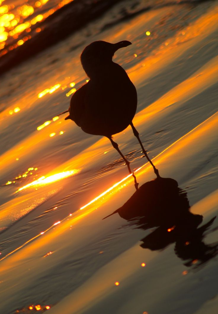 2ea6b44161bf6396b3200e9f4823a714--sunset-silhouette-water-reflections