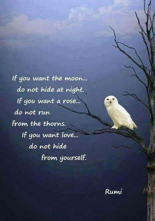 3bbaf7094ade8f9ce0bbeabeb3a4c0cd--quotes-of-rumi-sufi-quotes