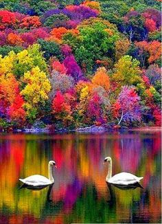 75515e85e357e78ddab98f97e69631b1--rainbow-forest-beauty-in-nature