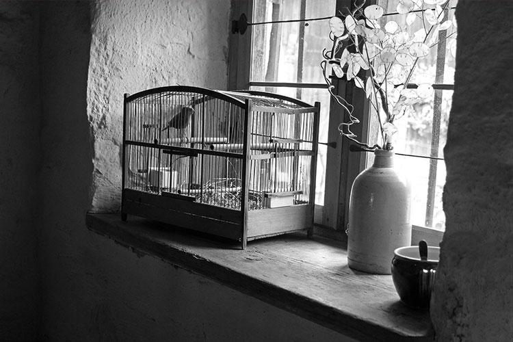 844.jpg caged bird