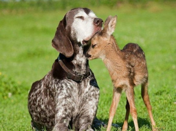 animal-Friends-deer-dog-cute-animal-pictures-pics