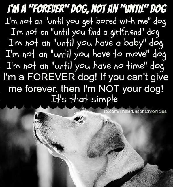 c7845d3bf17ad3170d375544e420fab2--picture-quotes-types-of-dogs