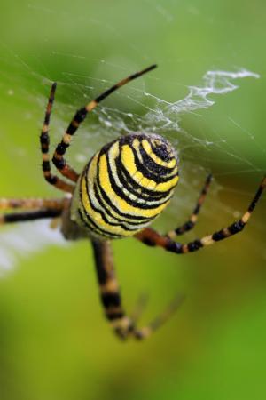 edderkoppens_spind