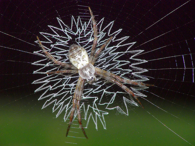 web decoration stabilimentum 1