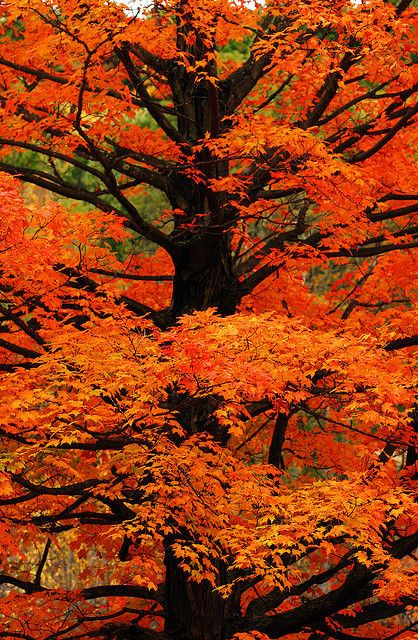 9991bf2bcf6ef16d8927112564814e5f--orange-orange-orange-trees
