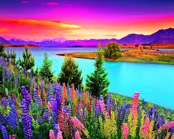 images.jpgmeadow flowers