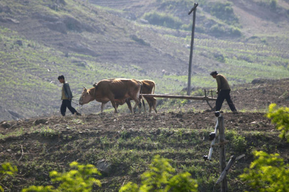 North-Korea--Farmers-till-001