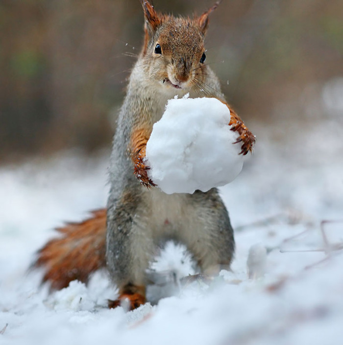 squirrels-making-a-snowman-2-700x704