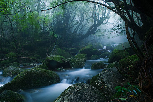 Yakushima-article-Mononoke-Forest-Casey-Yee-@-Flickr-