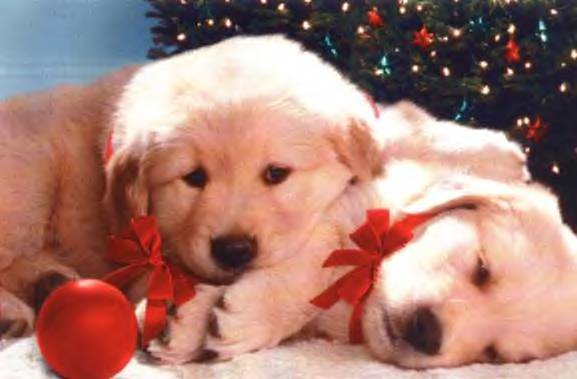 christmas-puppy-pics