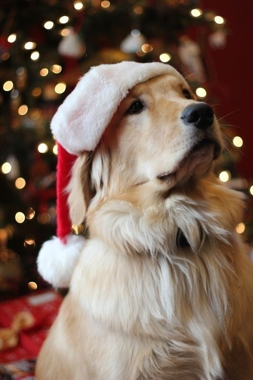 d9e9594af86023511e4d1b8971869151--christmas-puppy-christmas-animals