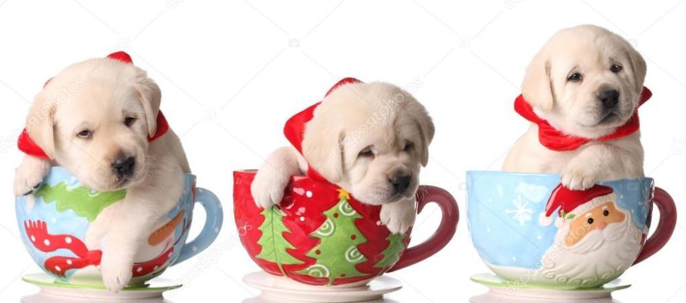 depositphotos_11106128-stock-photo-christmas-puppies