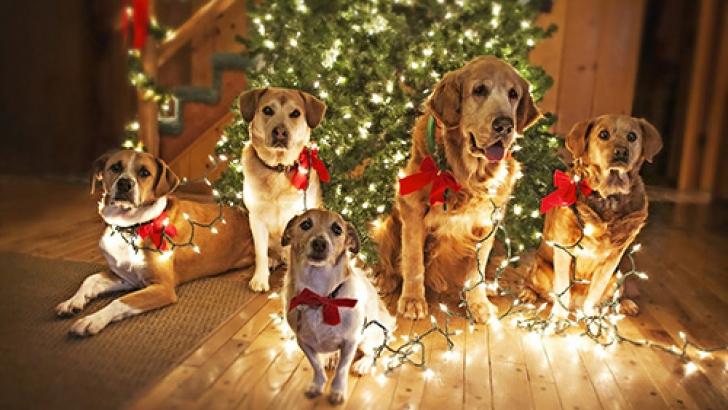 dogs_christmas