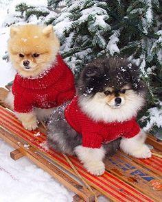 fe34f481e0b7517878a7bdd54461347a--christmas-puppy-christmas-animals