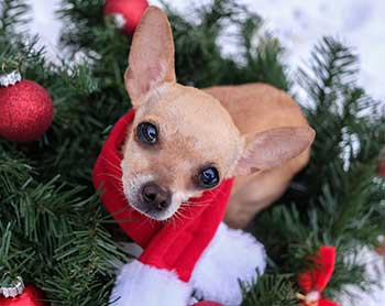 Holiday-pet-tips-Web