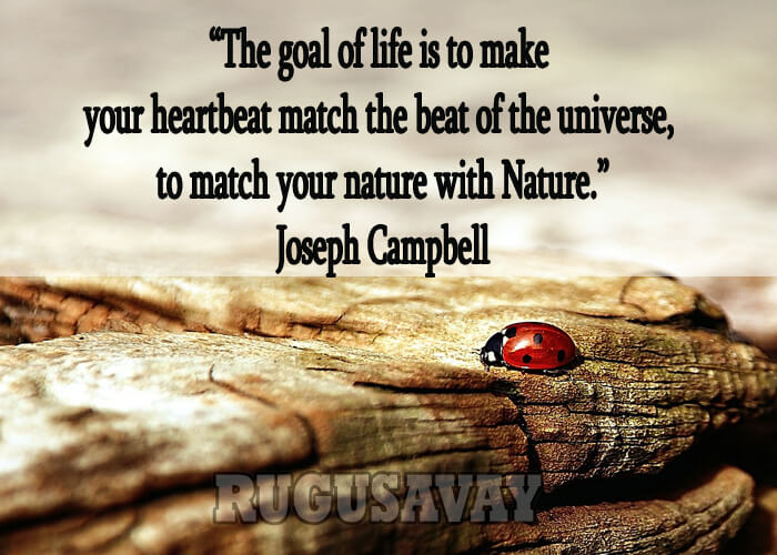 Joseph-Campbell-Quotes-1