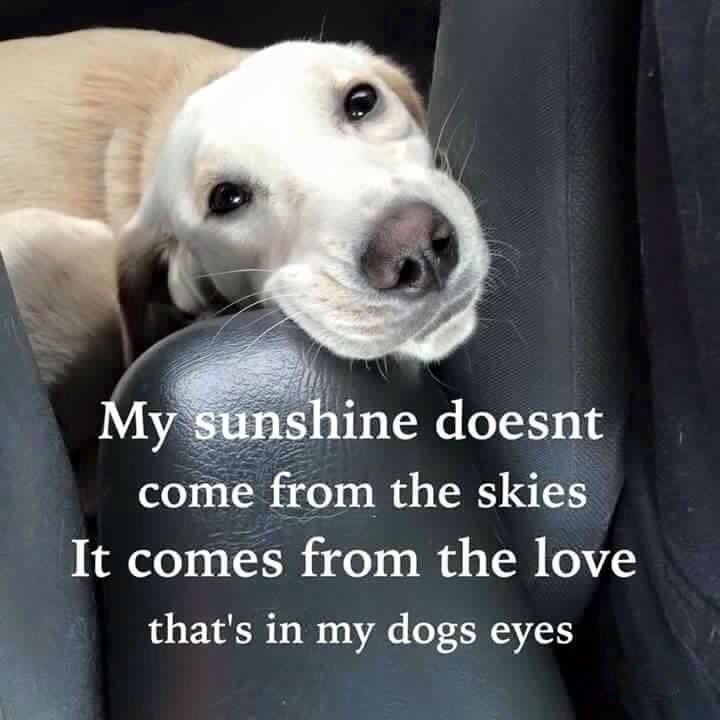 00e4cf2cd7d9d34681b980c4a0a2285d--dog-qoutes-dog-quotes-love