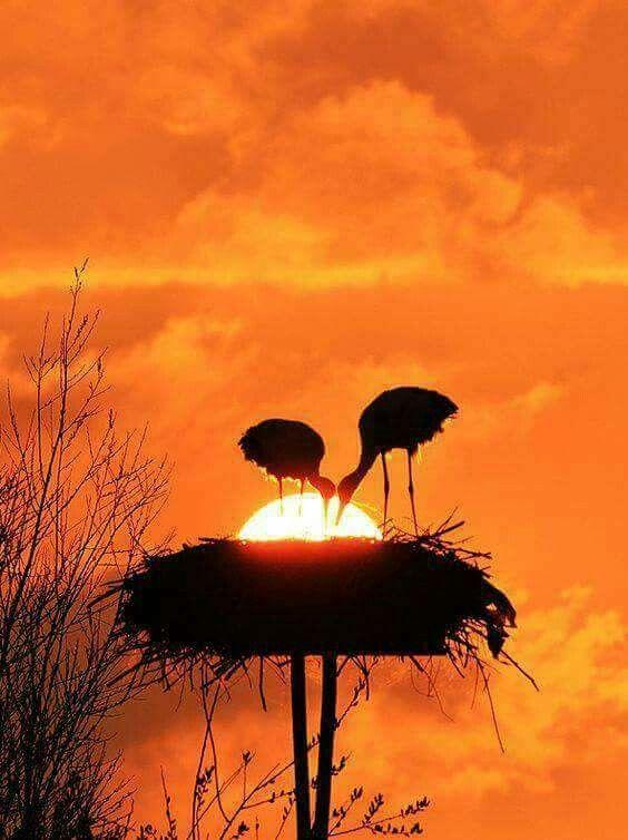 89fd5673ab0f13c1ee5217e9d68dea2e--amazing-sunsets-beautiful-sunset
