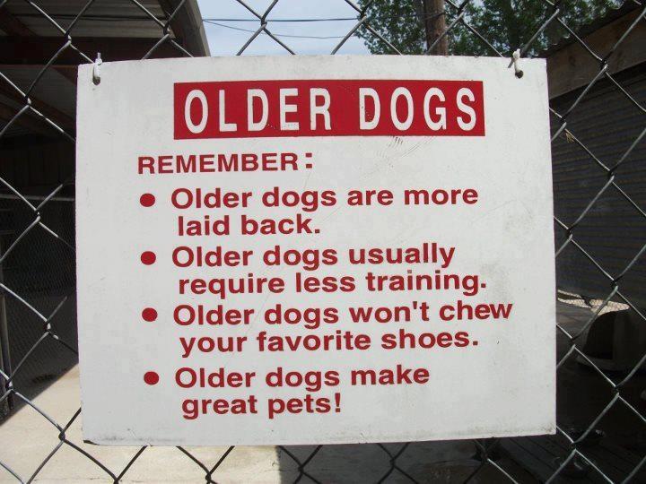c5525205e61e37c21ade17b01472be50--rescue-dogs-animal-rescue