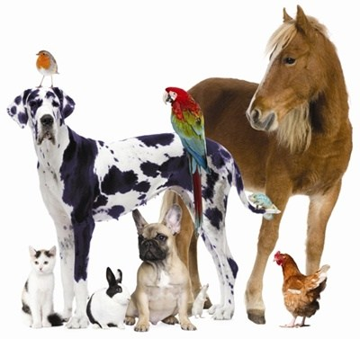 cats-dogs-horse-bird
