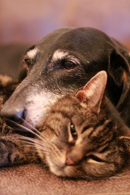 ea299d3a0934d6a34ec2a6a8ec151e69--cat-pillow-old-friends