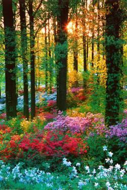 flower-forest_u-L-F2NSBT0